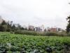 parc-ueno-Tokyo-etang-shinobazu-nenuphar-vue-ville