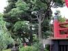 parc-ueno-Tokyo-temple-kiyomizu-kannondo-lanterne-verdure