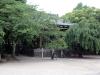 temple-zojoji-Tokyo-verdure