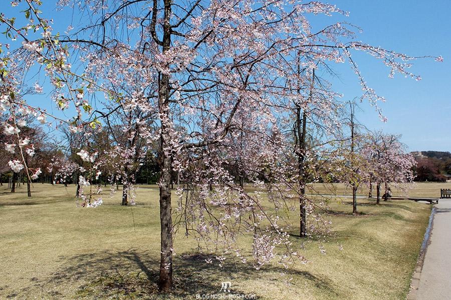 journee-kanazawa-chateau-cerisiers-japonais-esplanade