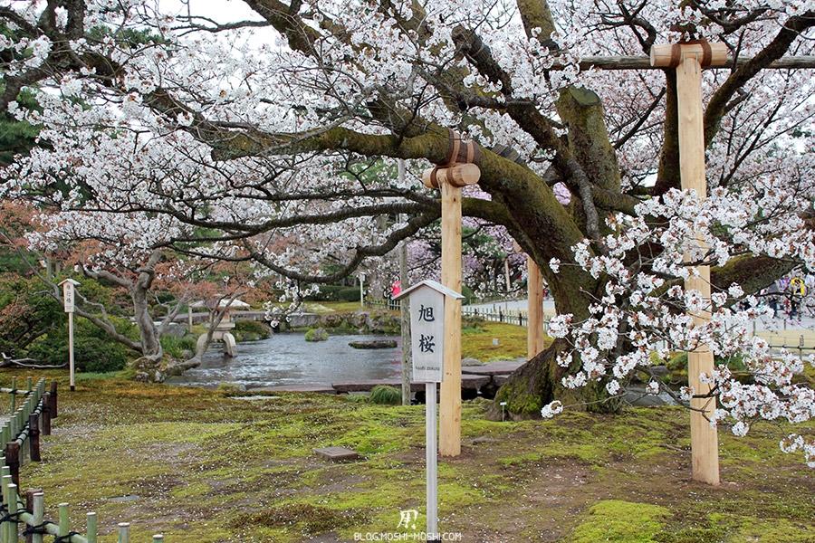 journee-kanazawa-jardin-kenrokuen-azahi-sakura