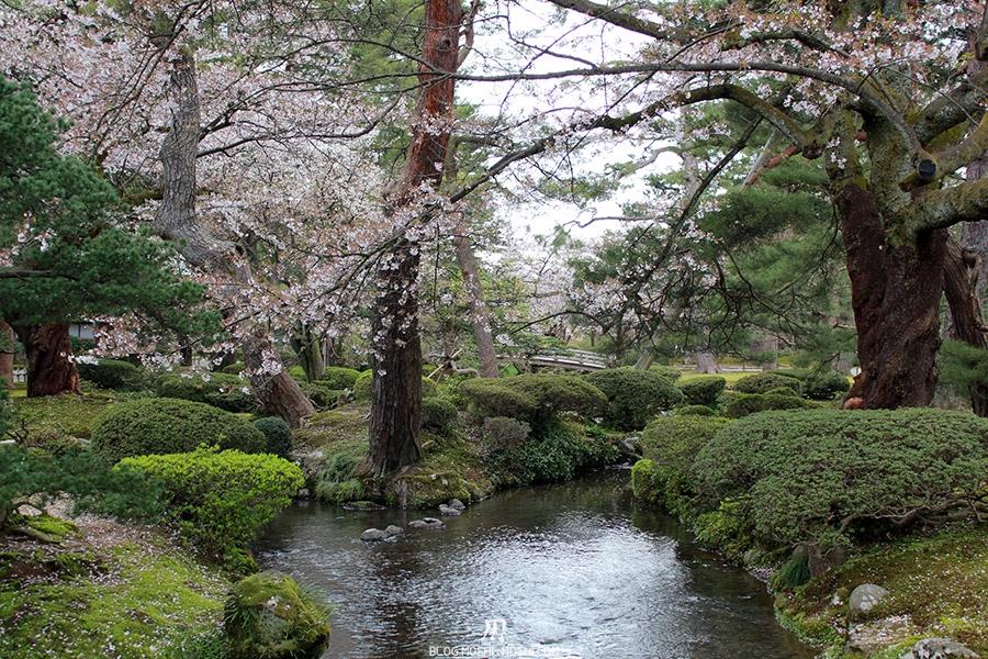 journee-kanazawa-jardin-kenrokuen-riviere-cerisiers