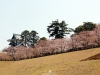 journee-kanazawa-chateau-allee-cerisiers
