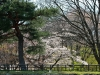 journee-kanazawa-chateau-cerisier-pin
