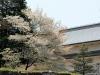 journee-kanazawa-chateau-cerisier
