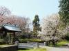 journee-kanazawa-chateau-pont-pierre-cerisier