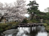 journee-kanazawa-jardin-kenrokuen-lanterne-sakura