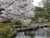 journee-kanazawa-jardin-kenrokuen-sakura-lanterne
