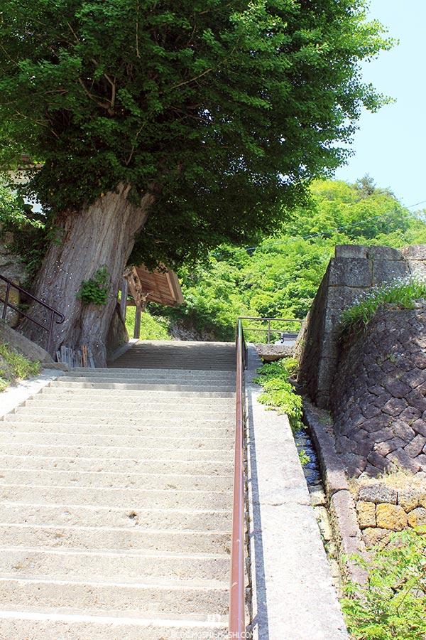 sendai-yamagata-temple-yamadera-risshaku-ji-encore-escaliers-enorme-tronc