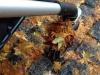 yamanaka-onsen-saison-momiji-feuilles-erable-japonais-roue-poussette