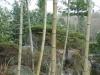 yunokuni-no-mori-bambou