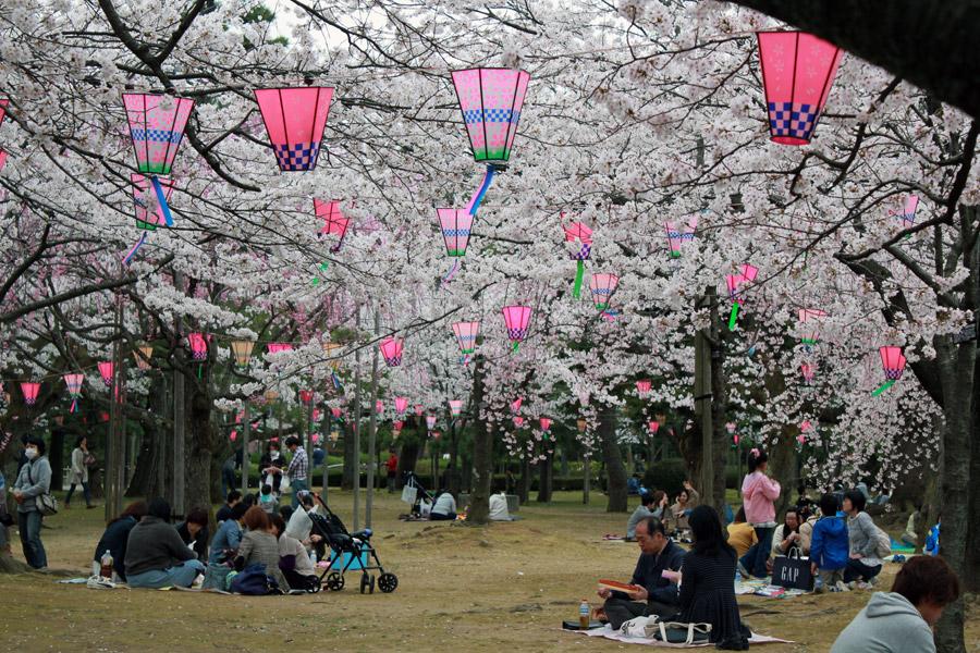 Trop tard pour les Sakura et faire un hanami dans le parc de la mairie de Komatsu cette année :/